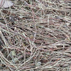 Borówka czernica łodygi