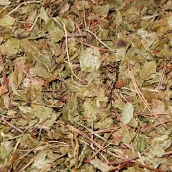 Borówka czernica liść