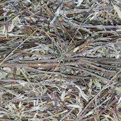 Szałwia łąkowa ziele